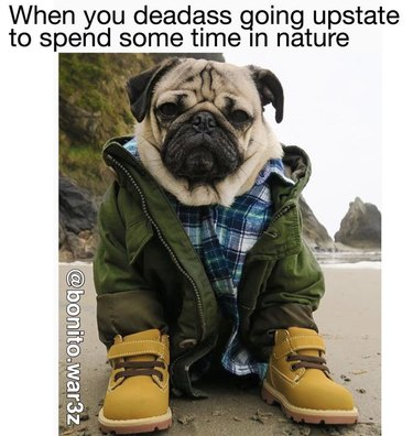 Pug all dressed up in Timberlands and outdoor stuff