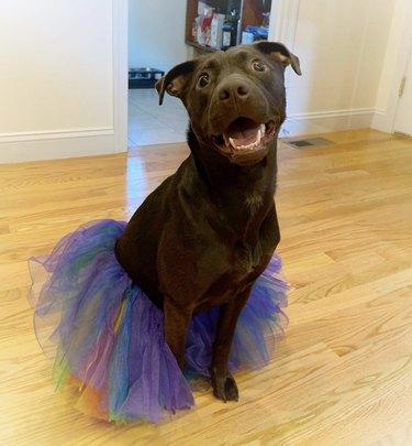 dog in purple tutu