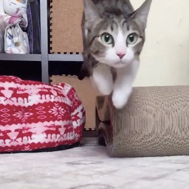 Funny slow motion cat videos