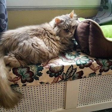Cat uses cat bed as cat pillow