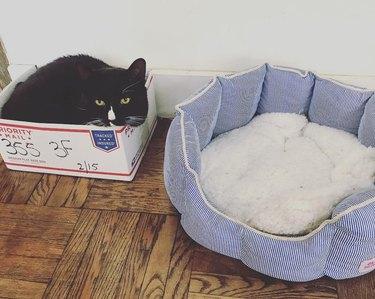 Cat sleeps in box instead of cat bed