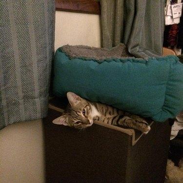 Cat uses cat bed like cat blanket