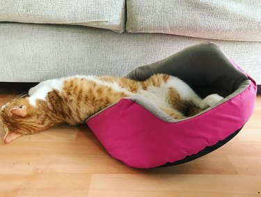 Cat sleeps half in bed, half out
