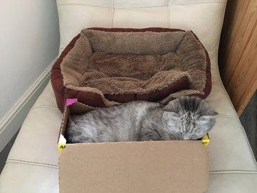 Cat sleeps in box instead of adjacent cat bed