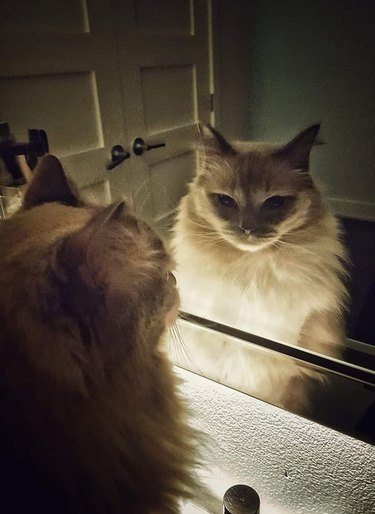 cat with powerful aura stares at reflection in mirror