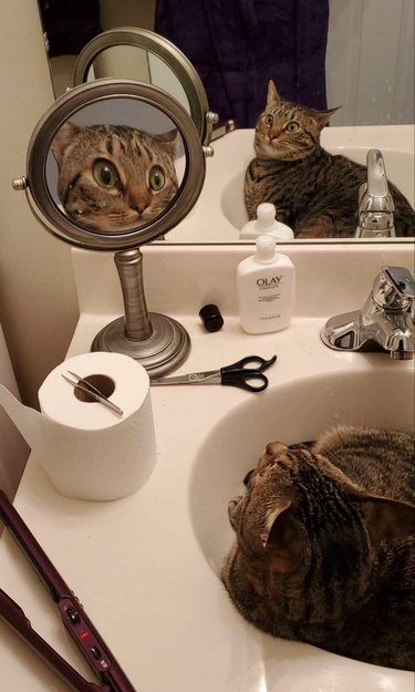 cat in sink staring at reflection in vanity mirror