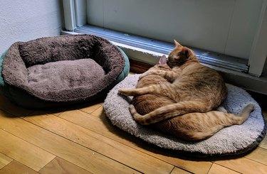 Cat sleeps on cat instead of cat bed