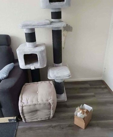 Cat sleeps in box instead of cat tree with bed