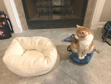 Cat prefers backpack to cat bed