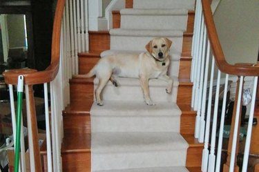 dog sitting on the stairs
