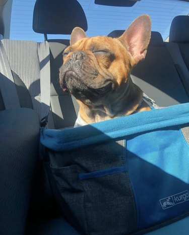 dog enjoying the sun in car seat