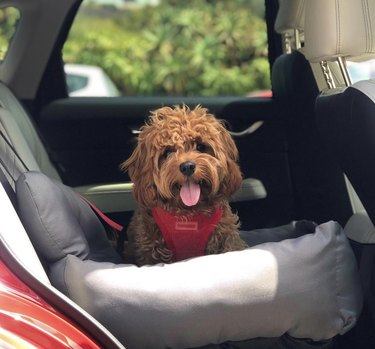 dog in gray car seat
