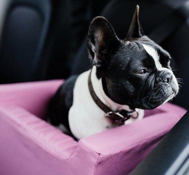 dog in pink car seat