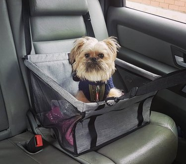 small dog in car seat