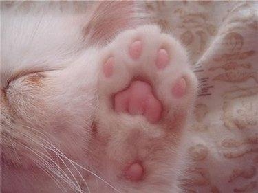 Underside of kitten's paw