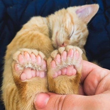 cat's little back feet
