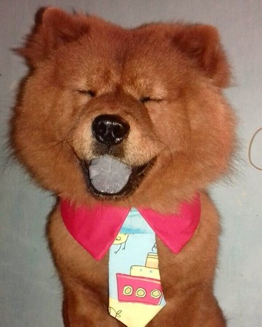 Silly dog in a bad tie