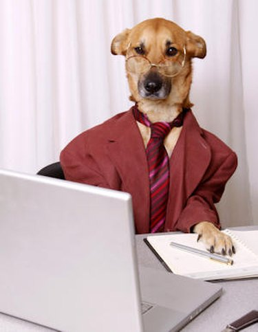 Weird pic of a dog at work