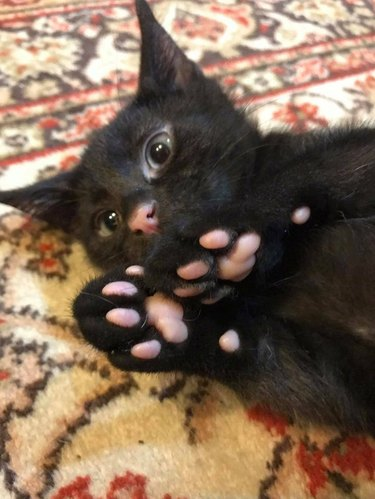 Black kitten with pink toe pads