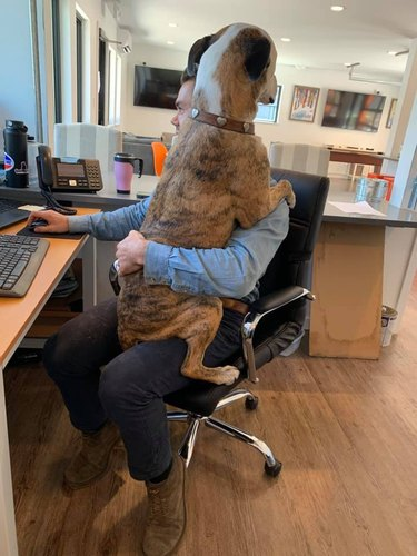 dog sits on mans lap in office