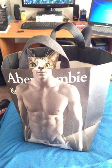 Cat in Abercrombie bag has wicked six-pack