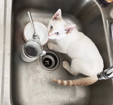 cat inside sink with dishes