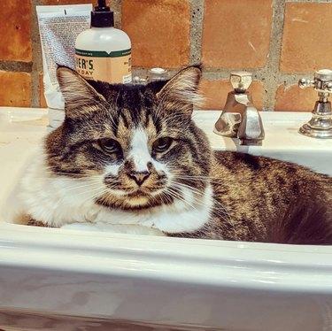 cat getting comfy inside sink