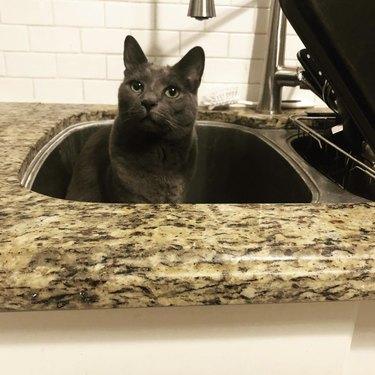 dark gray cat inside sink