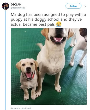 Two dogs at a dog daycare.