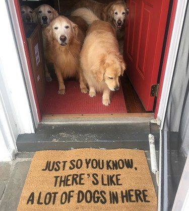 """A doormat that says """"Just so you know, there's like a lot of dogs in here"""" in front of open door with dogs inside"""