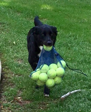 Get someone to look at you the way these dogs look at tennis balls