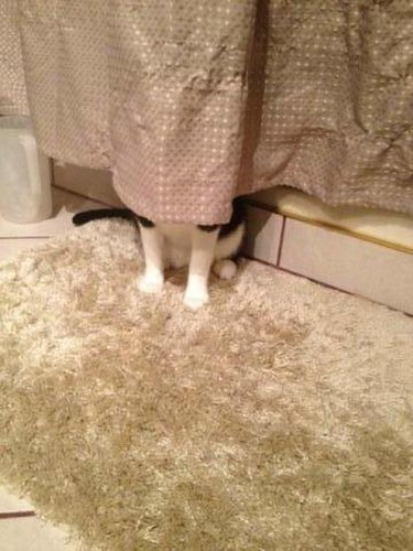 Cat hiding behind shower curtain