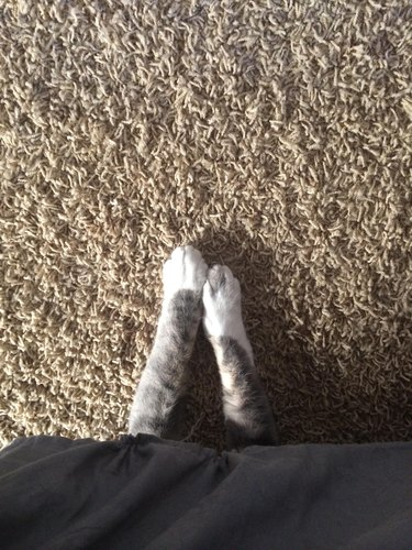 Cat hiding under bed with his paws sticking out