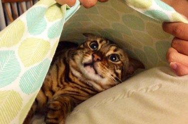 Cat hiding in pillow case