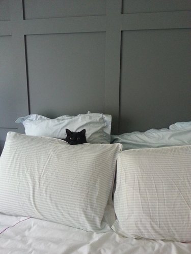 Black cat hiding behind white pillows