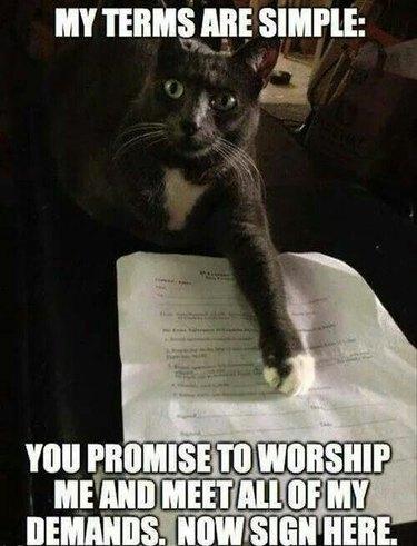 Cat meme about a cat contract