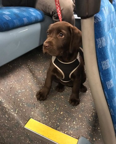 puppy on public bus