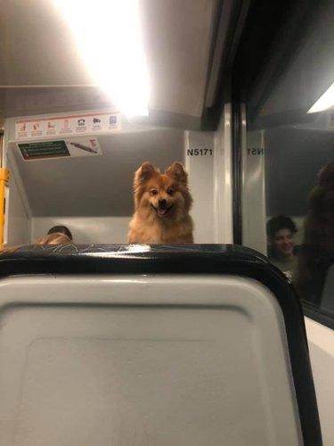 dog looks at passenger on train