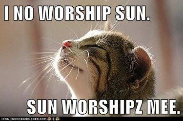 Kitten soaking up the sun