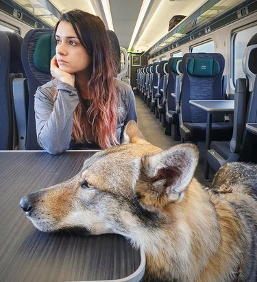 dogs looks out window on train ride