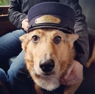 dog on train wearing conductors hat