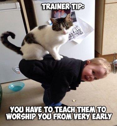 Cat sitting on a dumb kid