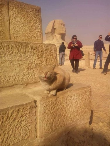 Very smiley cat at the sphinx