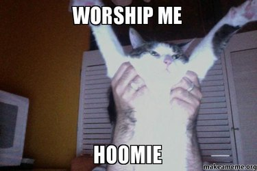 Cat with his arms held up