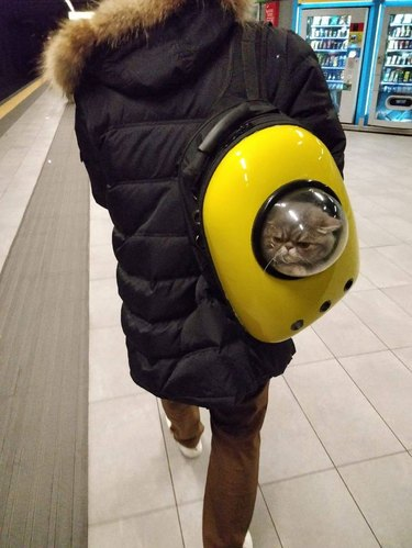 cat in backpack bubble on train