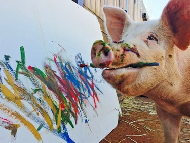 pig painting with a paintbrush