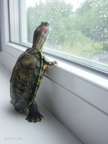 turtle looking out the window