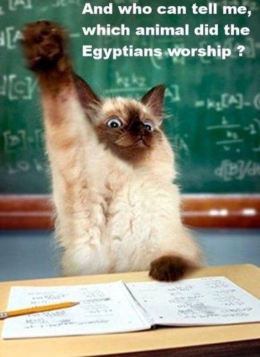 Cat in a classroom meme