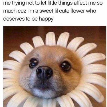 Cute Flower Dog