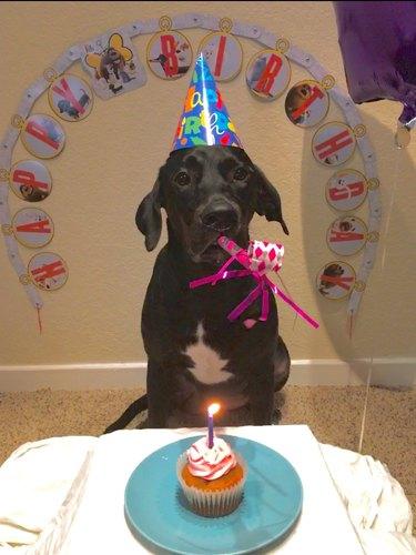Dog birthday party!
